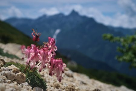 国内 夏山登山ガイド講習会2020